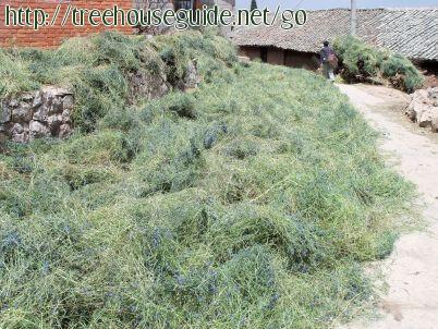 Yunnan - villagers - let - the - purple  vetch - dry - in - the - streets - before grinding - Pictures/Photography