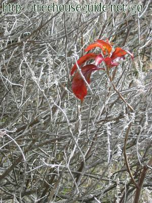 Red Leaf - Pictures/Photography